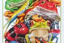 frogs and toads  / by MaeMae Renfrow