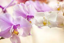Blomster og inneklima