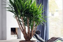 plantes vertes salon