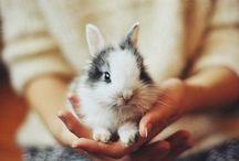Sweetest animals