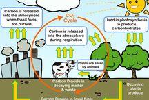 Цикл углерода