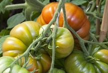 Garden and canning tips