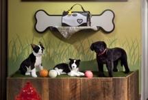 Pet store displays &decor