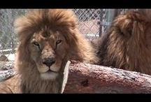 Free Animal Stock Video