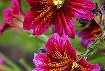 BEAUTIFUL FLOWERS / by SoniyaNiya Verma