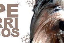 carteles perros / carteles