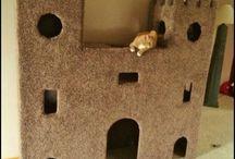 kocici domky