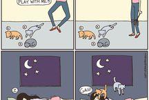 fun, funny, funnier, So True! Not funny! / by Amanda Anderson