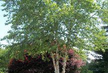 stromy, ,keře, výsadba
