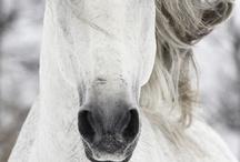 Horses / by Regina Beane Feagin
