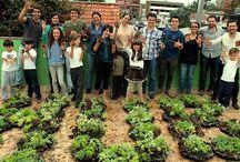 Crea Nuestro Universo / Techos verdes y jardines verticales Colombia www.ecotelhado.com.co