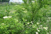 Společenství rostlin