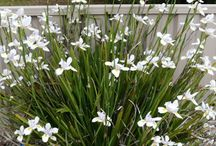 Hardy plants