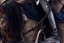 ❤️Horses and riders❤️