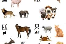 Chinese Measure Words for Animal