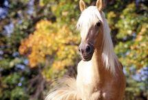 Horse - Пони