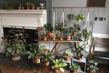 Happy HAUS plants