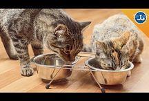 Animal companions