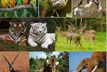 wildlife tour in gujarat