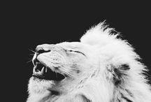 Lions voor Jessey