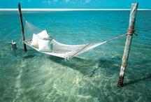 lovely outdoor hammocks