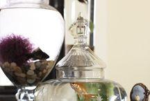 Aquariums plus fish / by Maureen Pascall