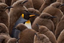 Penguins / by Emily Daines