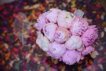 Flowers by Anamaria Macovei / Peonies