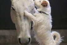 lovely animal photos❤