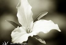 flower photography / Beautiful and simple flower shots.