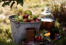 Frutti e ortaggi