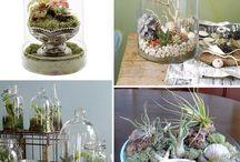 Garden, plants, pots, & tips