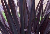 New Zealand grasses / Top garden