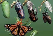 ❇ミ❇彡Butterfly effect❇ミ❇彡