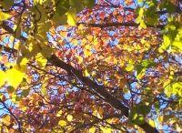 Trees of Leaves