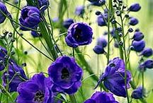 flores y otras plantas