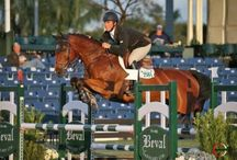 Show Jumping Daily