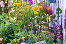 Garden Ideas / Best plants for a SE Queensland garden