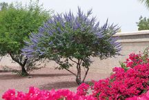 Landscape architecture for Zona House / Xeriscape. Color. Succulents. Cacti.