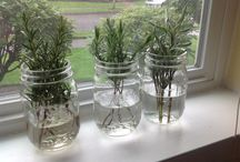 Plant propagation/cuttings