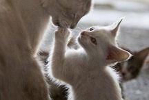 Kissat ❤️ / Kissojen kuvia ja muuta söpöstelyä