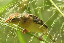 Birds / Birds,