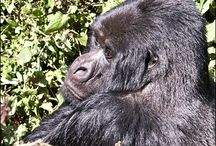 Rwanda Safaris / East Africa Eco Explorer is a privately run Rwanda safaris and tour operator offering affordable gorilla trekking.