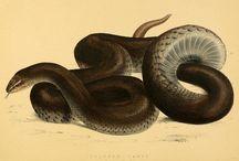 Stampe di serpenti