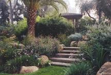 Back yard / by Liz Rogers
