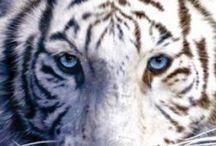 tiger a jiné čičí