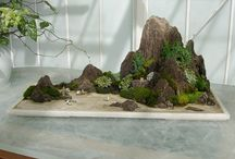 giardini-bonsai