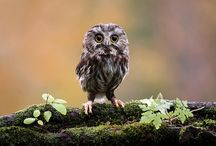 Owl Have Another One... / by Cindy Strickland