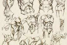 estudios de torso