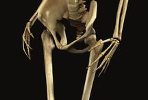 骨格_筋肉‗身体のつくり